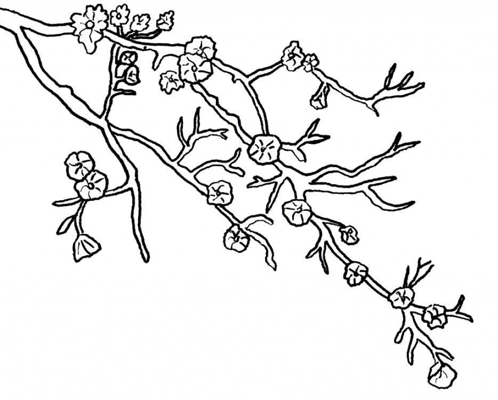 1024x823 Cherry Blossoms Coloring Page With Blossom