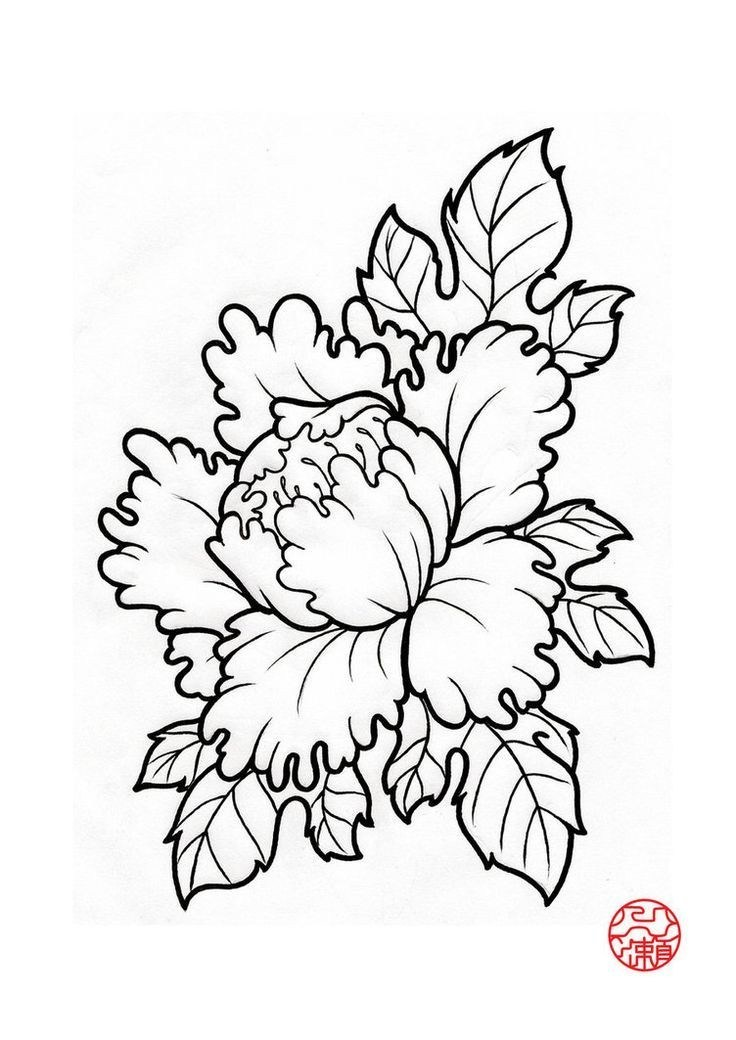736x1040 Japanese Peony Drawing New 35 Best Japanese Peony Flower Tattoo