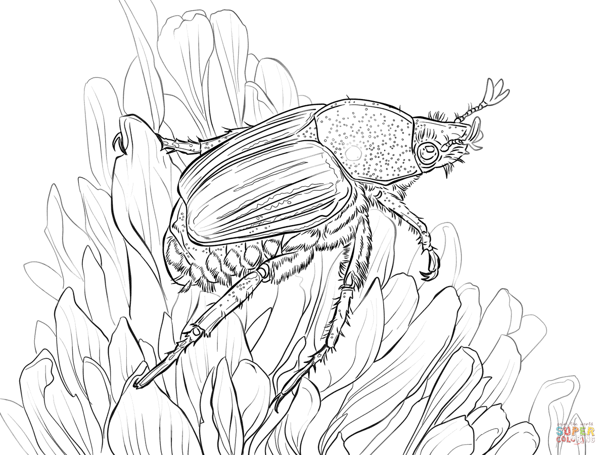 1199x899 Japanese Beetle Sits On Flower Coloring Page Free Printable