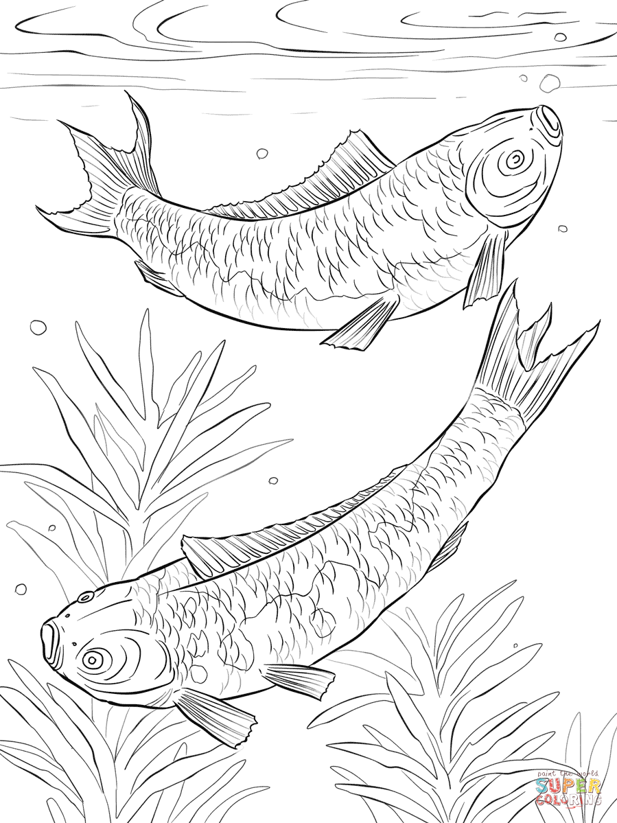 899x1199 Koi Fishes Coloring Page Free Printable Coloring Pages