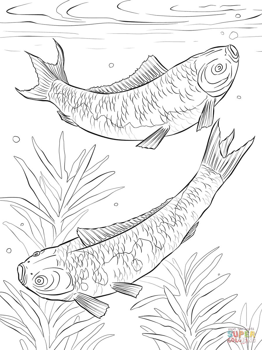 Gemütlich Japanische Koi Fisch Malvorlagen Galerie - Entry Level ...