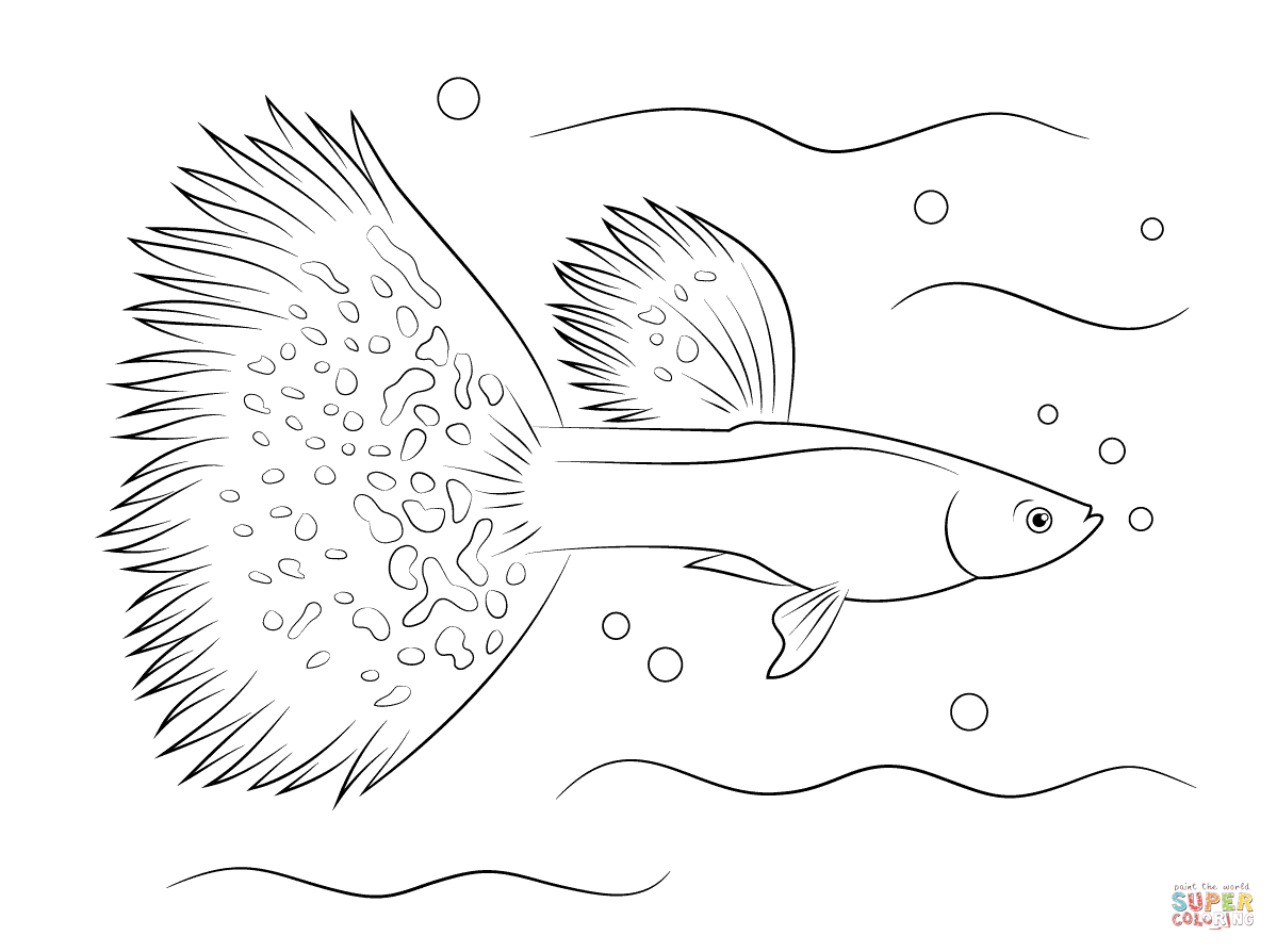 1199x894 Siamese Fighting Fish Coloring Pages