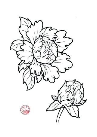 322x456 Japanese Flower Drawing Image Result For Peony Line Drawings Media