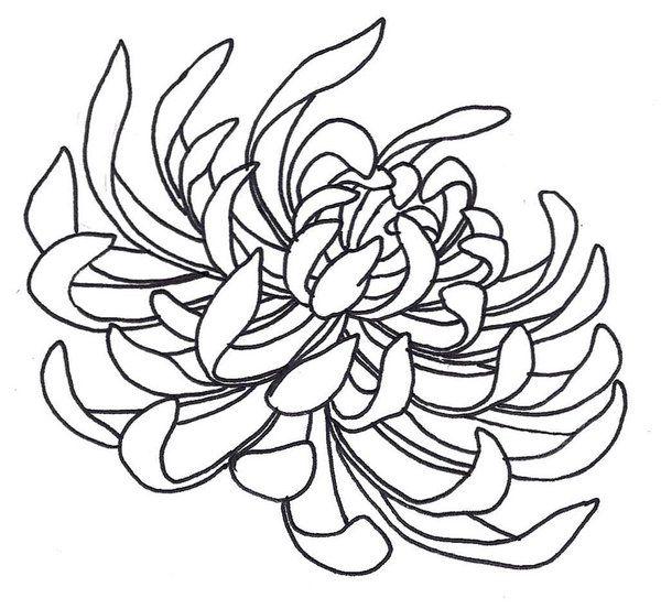 600x553 Spider Chrysanthemum By On @