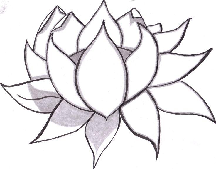 736x577 Flower Drawings