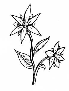 232x304 Easy Japanese Flowers Drawings