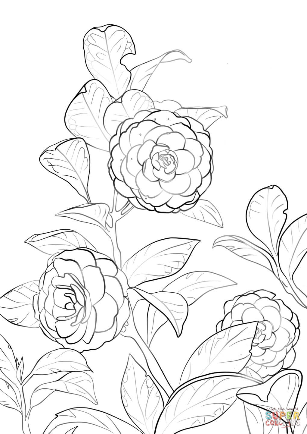 1020x1440 Japanese Camellia Coloring Page Free Printable Coloring Pages