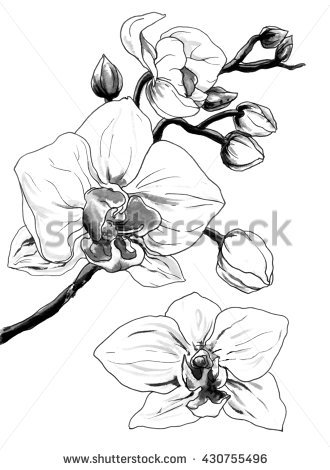 330x470 Drawn Orchid Japanese