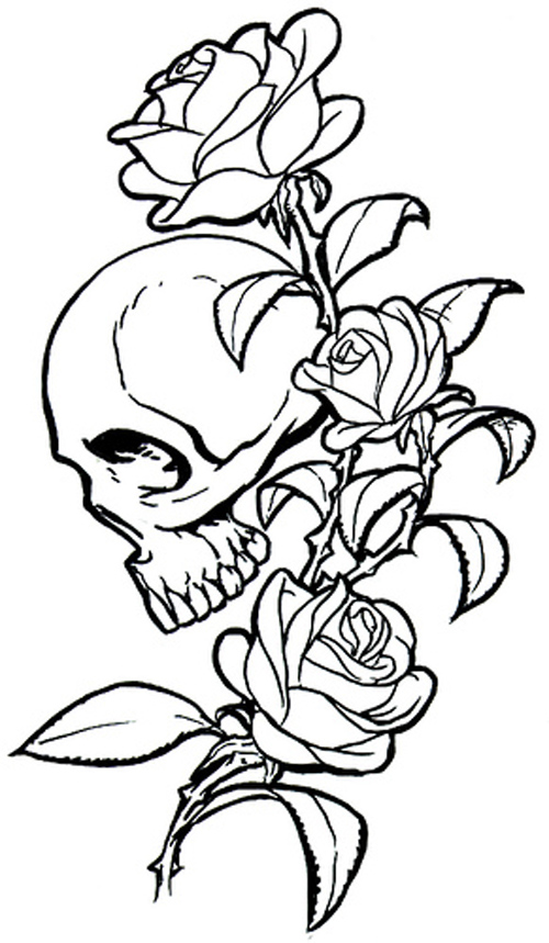 500x859 Flower Drawing Archives