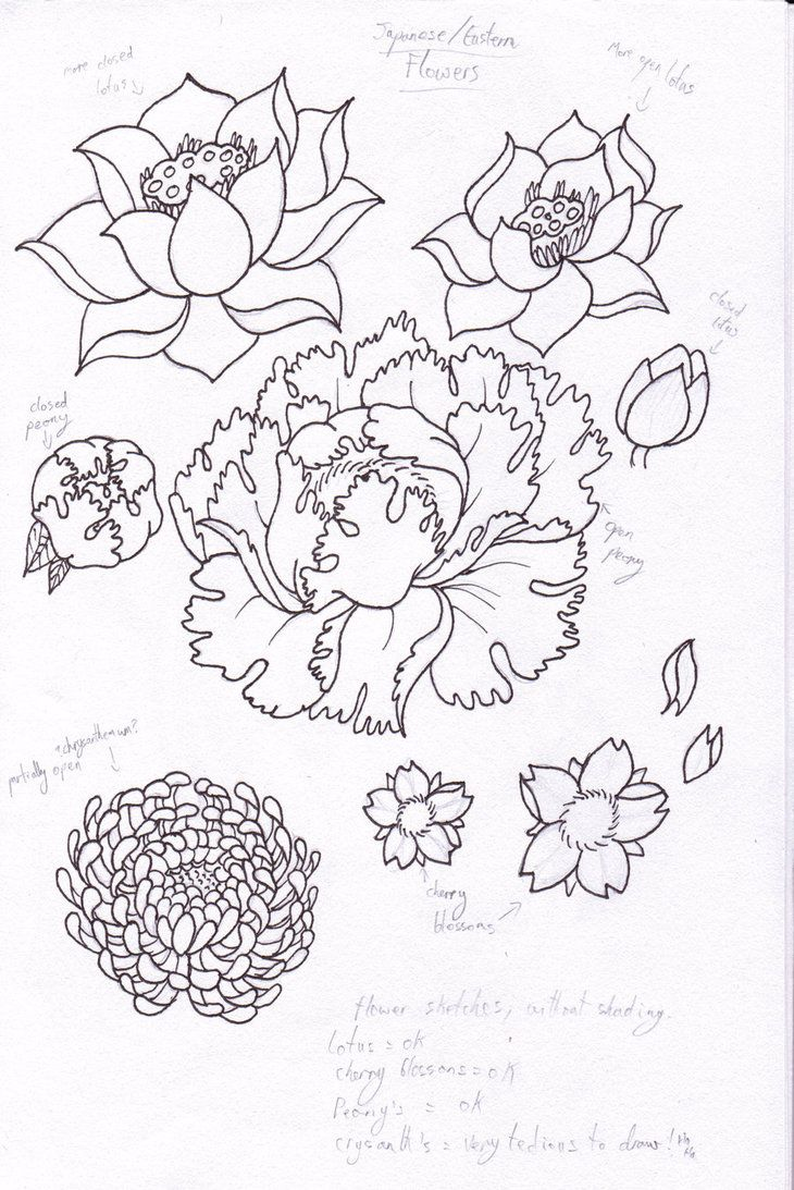 730x1093 52 Best Floral Vetor Images On Floral, Line Drawings