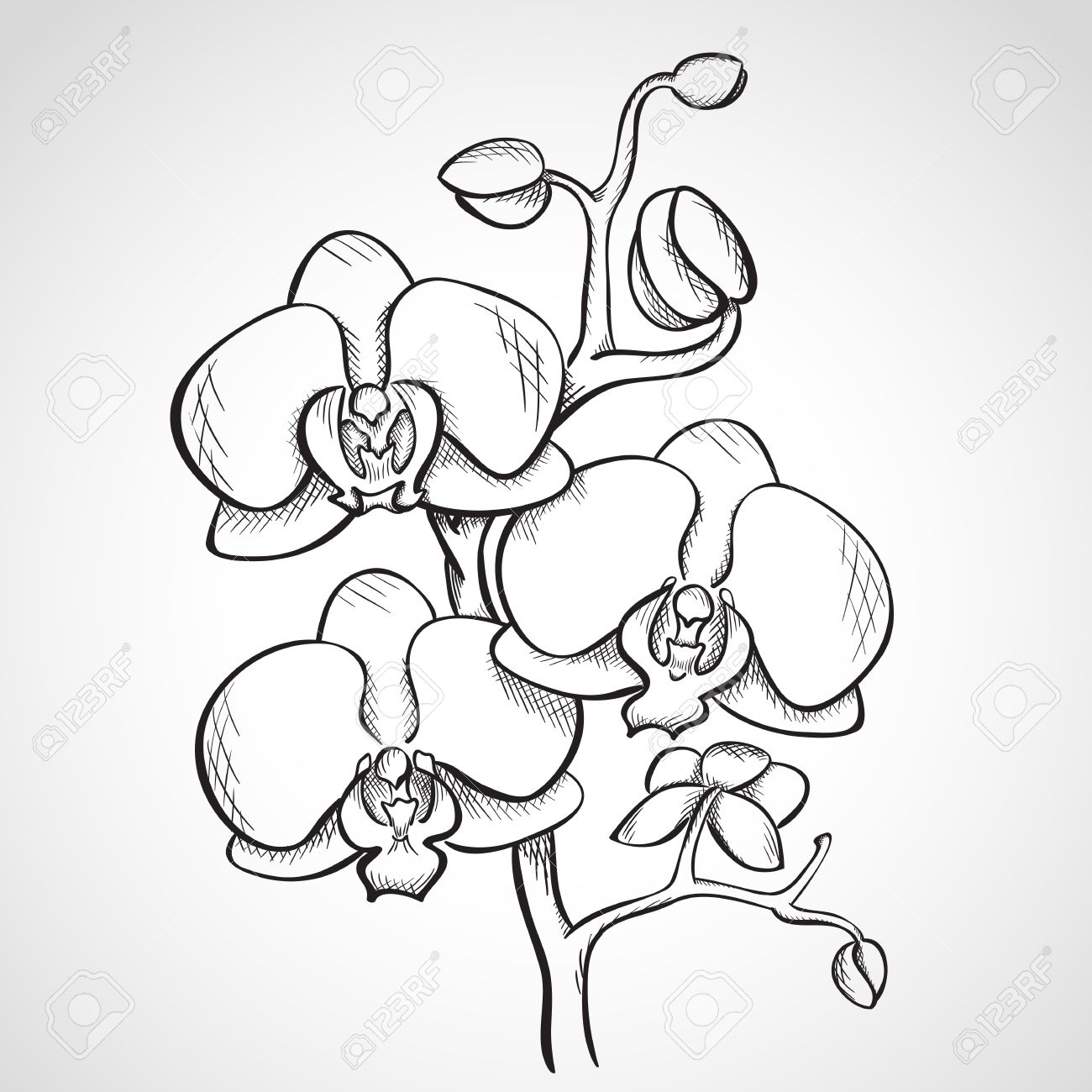 1300x1300 Gousicteco Orchid Drawing Outline Images