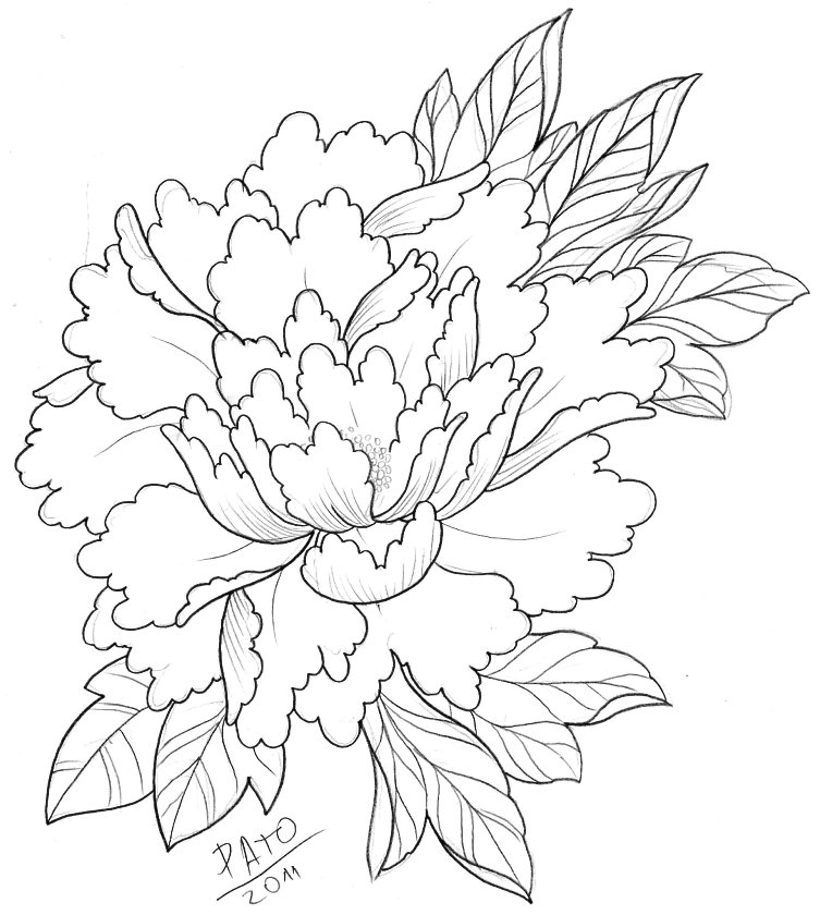 753x840 Peony By Patoink