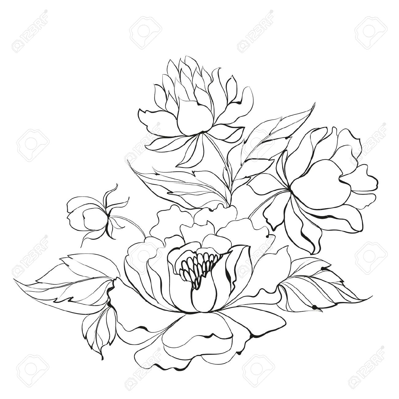 1300x1300 Japanese Peonies Clipart