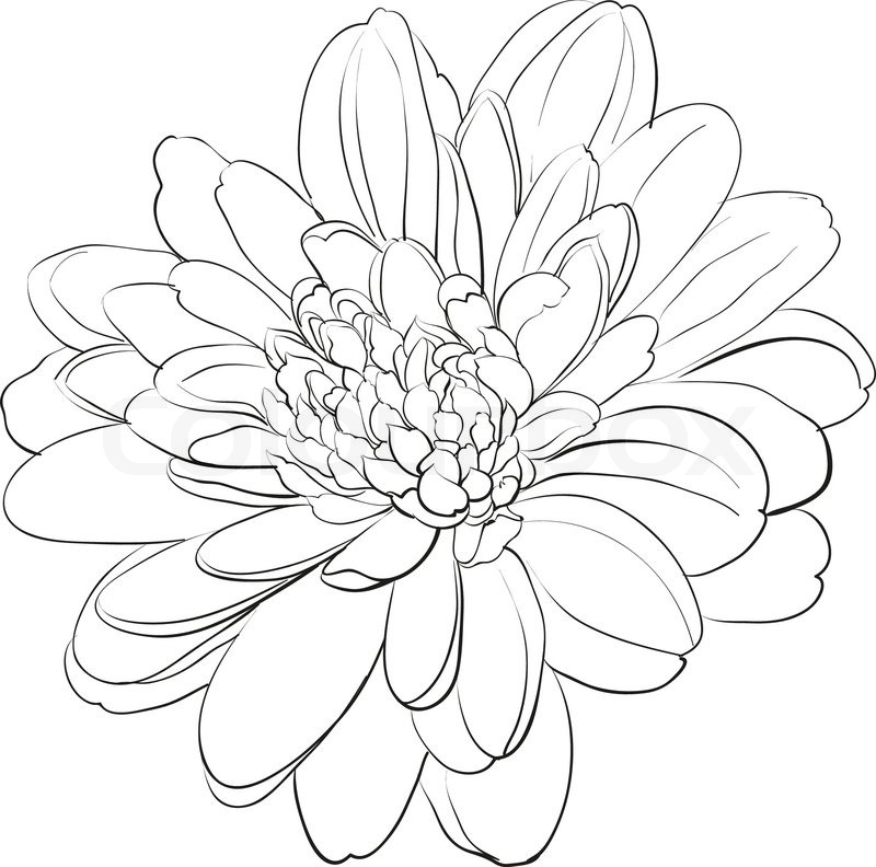 Japanese Flower Line Drawing : Japanese flowers drawing at getdrawings free for
