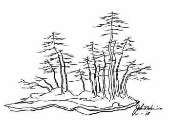350x255 John Naka's Drawing Bonsai Desighn Drawings