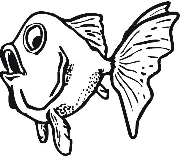609x525 54 Best Goldfish Images On Goldfish, Red Fish And Fish