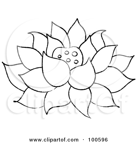 Japanese Lotus Drawing