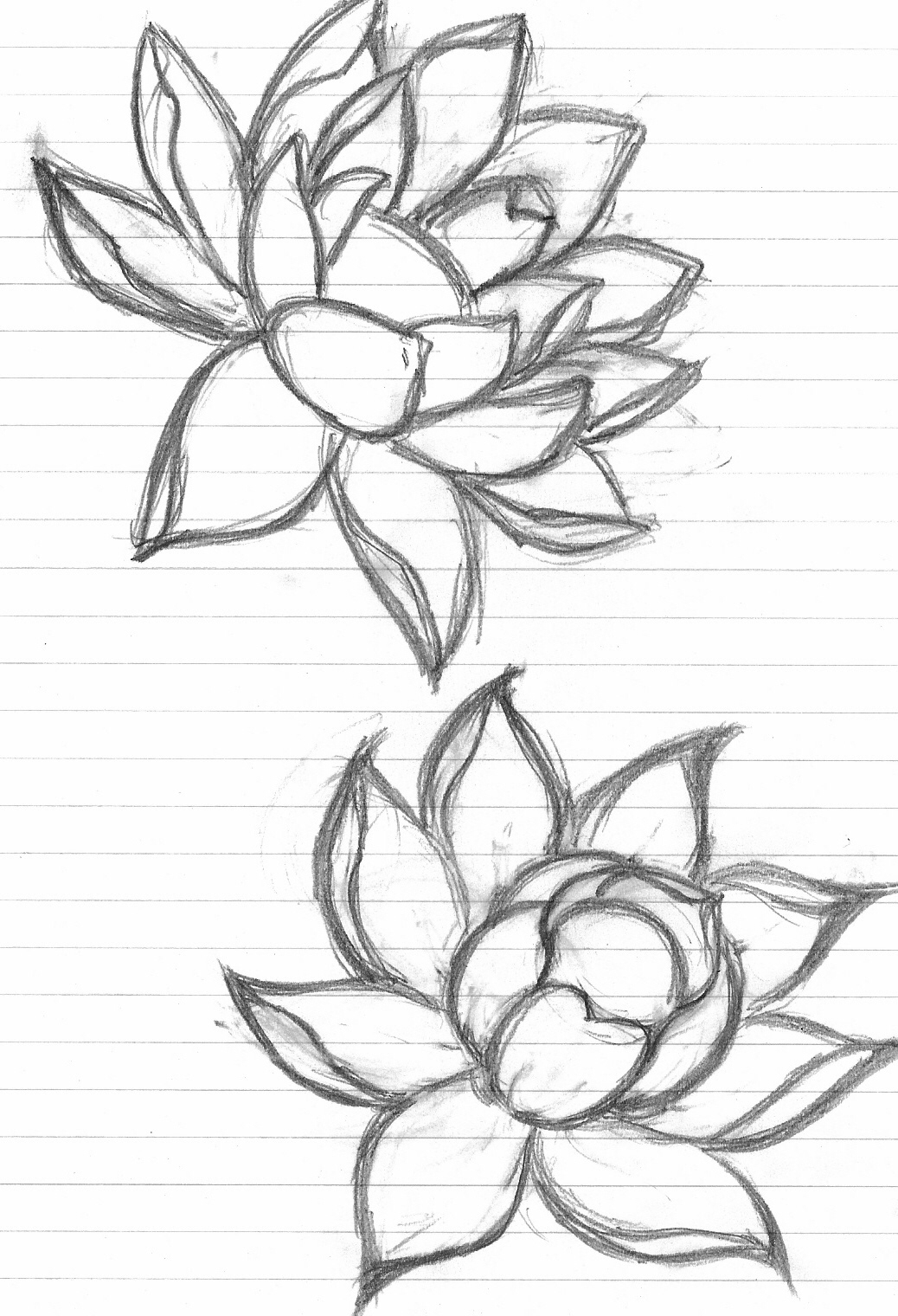 Japanese lotus drawing at getdrawings free for personal use 1038x1520 draw a lotus flower mosaic projects lotus and mosaics mightylinksfo