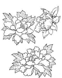 238x300 Flowers Sketches