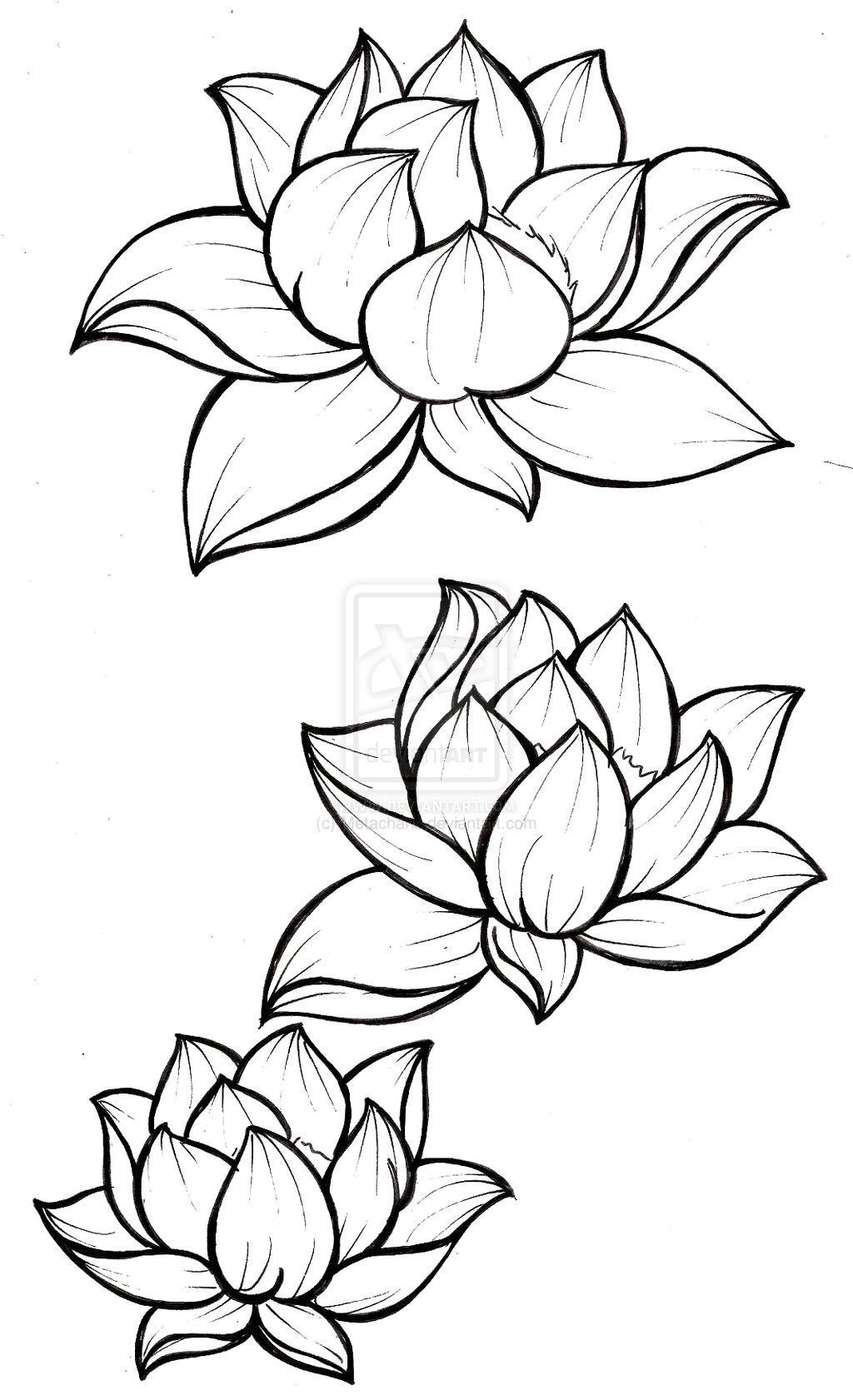 Japanese Lotus Drawing At Getdrawings Free For Personal Use