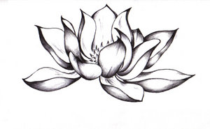 Japanese lotus drawing at getdrawings free for personal use 300x185 pix for gt buddha lotus flower drawing ideas pinterest lotus mightylinksfo