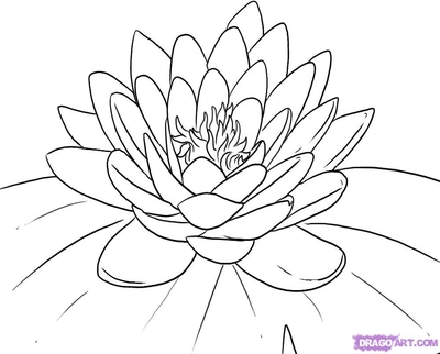 400x322 Water Lily Coloring Pages Pad Page