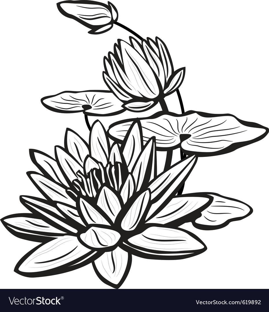 931x1080 Gallery Sketch Of Lotus Flower,