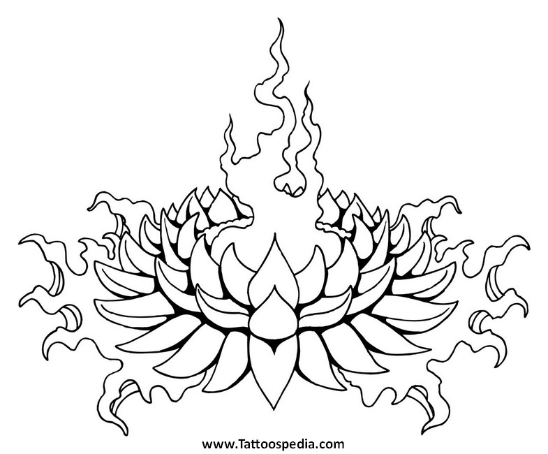 785x650 Images Japanese Lotus Flower Outline