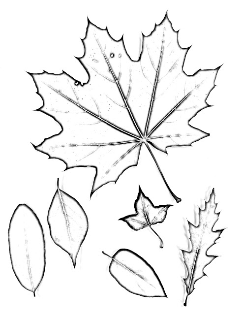 490x640 The Helpful Art Teacher Drawing Magnified Leaves Finding The Details