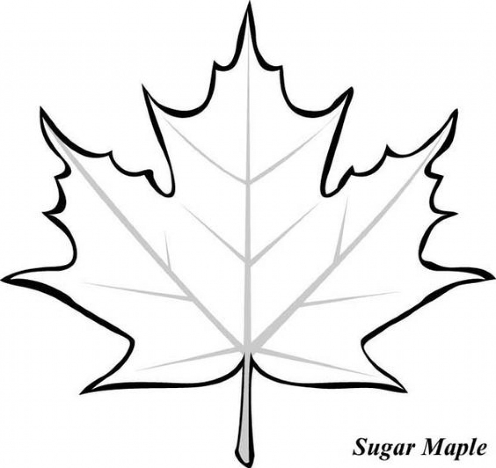 1024x965 Free Maple Leaf Coloring Page Book Picture