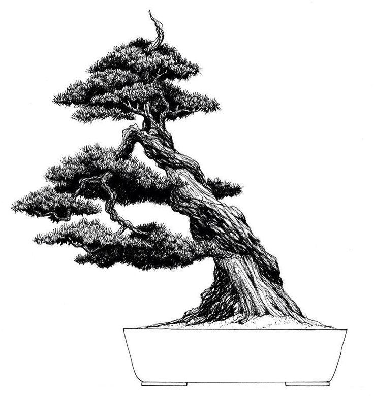 736x780 24 Best Disegni Bonzy Images On Bonsai, Bonsai Art