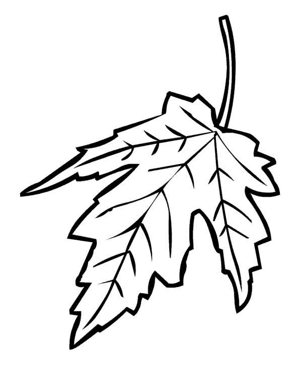 600x761 Drawn Maple Leaf Fall Leaves