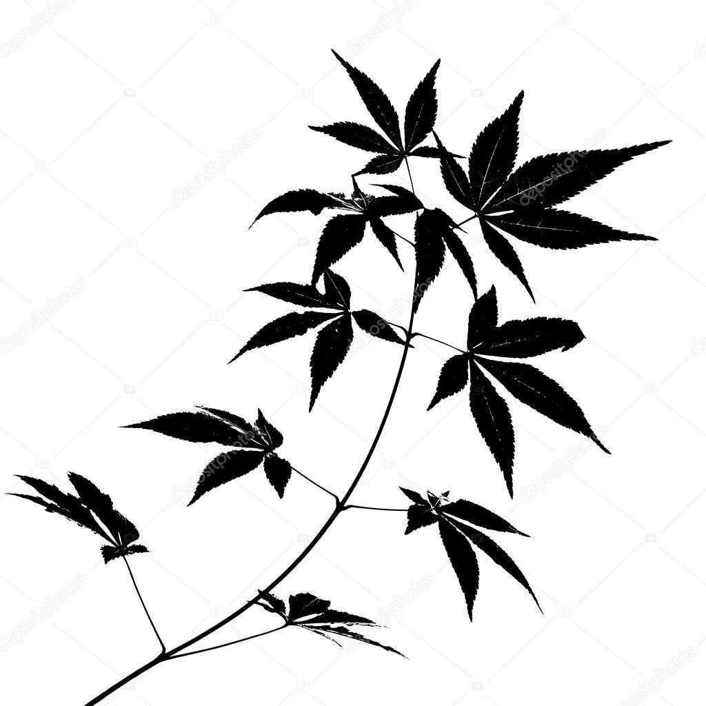 1024x1024 Japanese Autumn Maple Tree Leaves Stock Photo Madllen