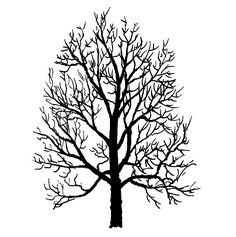 236x237 Maple Tree Seeds Drawing Images Amp Pictures