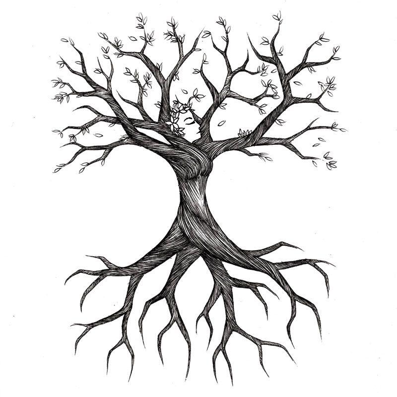 800x800 Tree Roots Sketch Treesa's Tree Decor For My Salon
