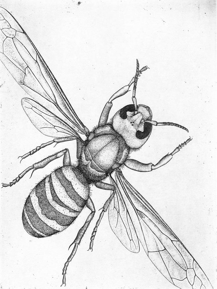 750x1000 Illustrations For Wicked Bugs By Artist Briony Morrow Cribbs