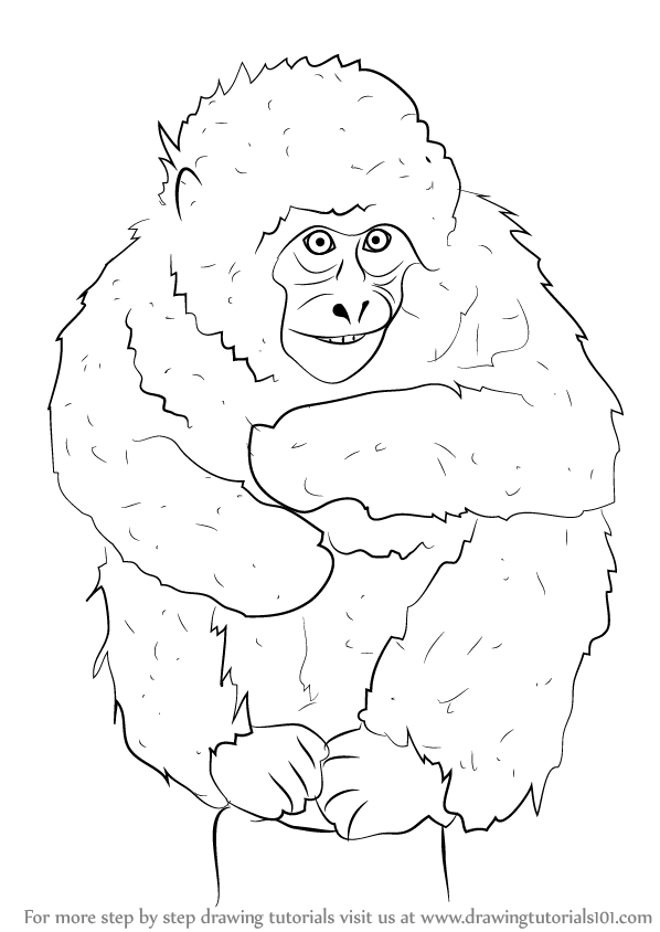 598x844 Learn How To Draw A Japanese Macaque (Primates) Step By Step
