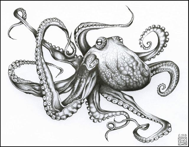 640x499 Curiosity Cabinet Of Xnpurple Black White Drawing Octopus