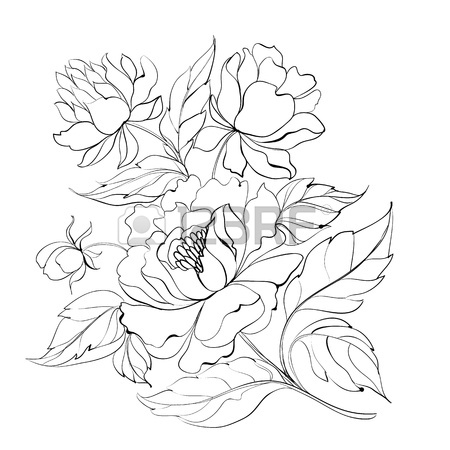 450x450 Ink Painting Of Peony Stock Vector Glass Peony