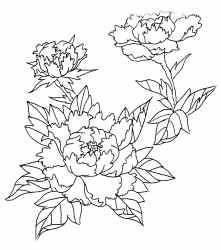 221x250 Japanese Peony Drawing Awesome Drawn Peony Japanese Pencil And