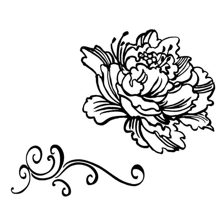736x736 Peony Drawing Clip Art