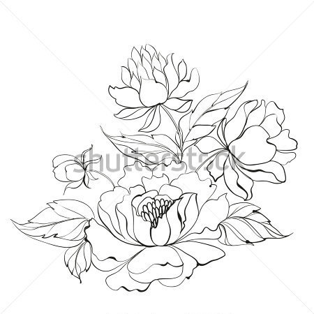 450x450 Peony Outline Clipart
