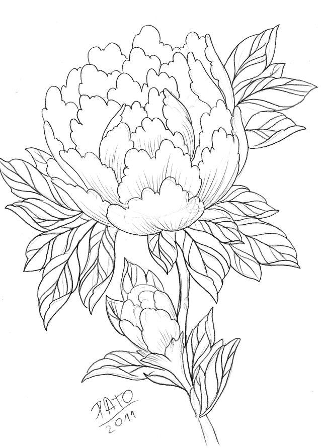 638x891 Peony Rose Drawing