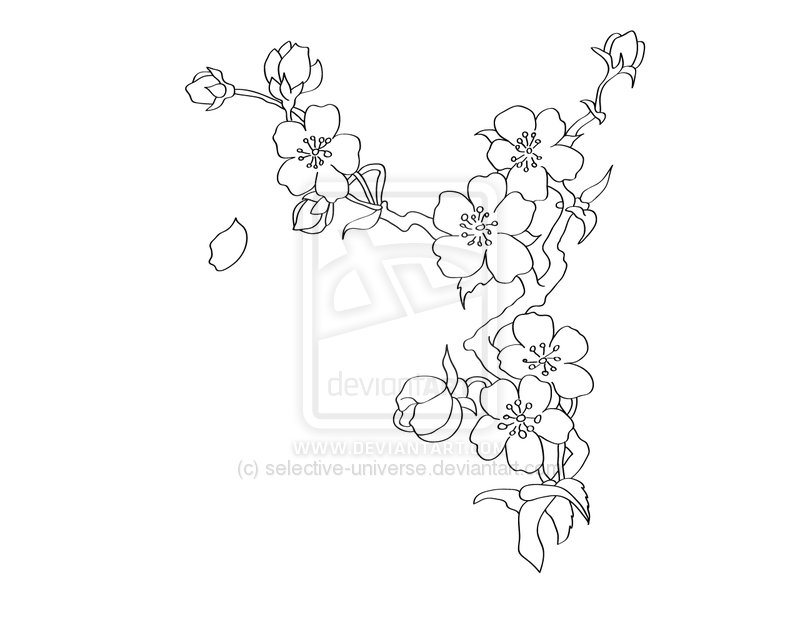 800x640 Cherry Blossom Clipart Line Drawing
