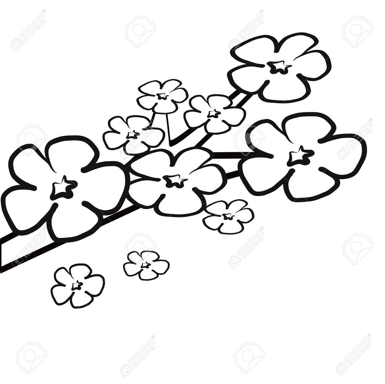 1300x1297 Colorless Cherry Blossom Flower On Branch For Coloring Book