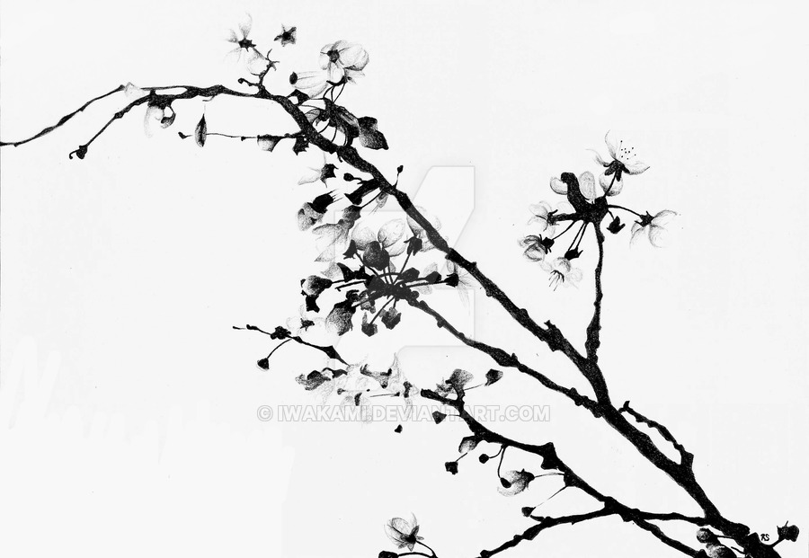 900x621 Drawn Cherry Blossom Black And White