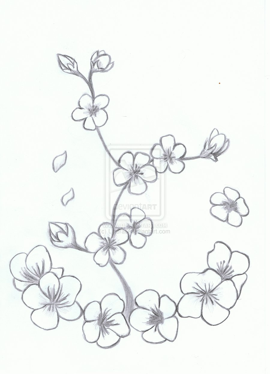 900x1247 Drawn Sakura Blossom Line Drawing