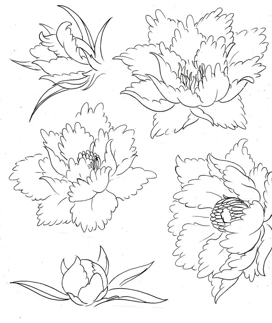 900x1070 Drawn Peony Traditional Japanese Flower