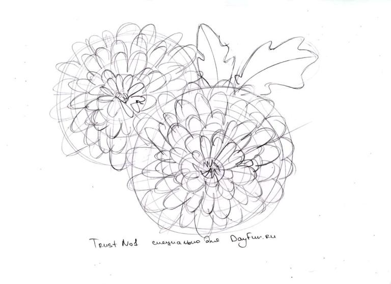 768x559 How To Draw Chrysanthemums Step By Step