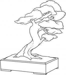 266x302 How To Draw How To Draw A Bonsai Tree